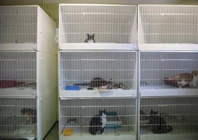 Νοσηλεία Γάτων Άγιος Μόδεστος